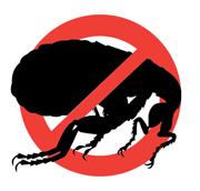 Уничтожение тараканов, клопов Тюмень
